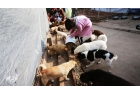 5,000 stray cats and dogs will be given a kilo of chicken in chengdu